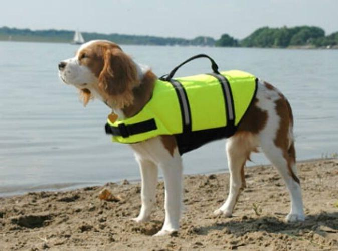 dog life jacket pet preserver neon yellow