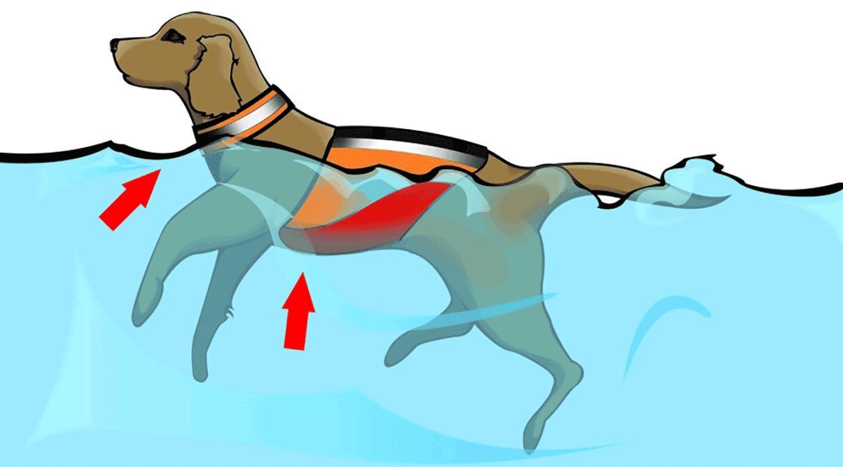 Pet Life Swimming Reflective Stripe PULL